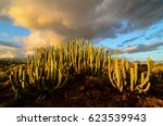 Calm Cactus Desert Sunset In...