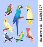 cartoon tropical parrot wild... | Shutterstock .eps vector #623565827