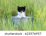 Stock photo adorable kitten outdoors in green tall grass on a sunny day 623576957