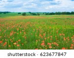 spring time with indian...   Shutterstock . vector #623677847