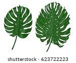 monstera leaf illustration ... | Shutterstock .eps vector #623722223