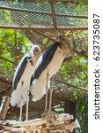 Small photo of lessor adjutant stork