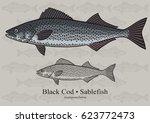 black cod  sablefish. vector...