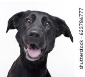 Small photo of Portrait of an adorable mixed breed dog, studio shot, isolated on white.