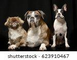 studio shot of three adorable... | Shutterstock . vector #623910467