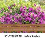 A Pink Flower Is Bougainvillea...