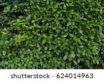 Hedge Textures