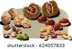 walnuts  chestnuts  hazelnuts... | Shutterstock .eps vector #624057833