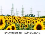 Yellow Blooming Sunflower Fiel...