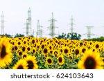 Yellow Blooming Sunflower Fiel...