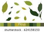 set of ficus leaves. green. eps ... | Shutterstock .eps vector #624158153