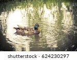 A Duck In The German Spreewald...