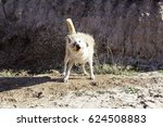 Stock photo hunting dog mud bath in forest nature 624508883