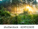Forest Sunlight Through Trees...