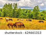 Stock photo horse herd grazing in field on horse farm 624661313