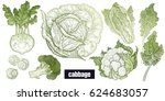 various cabbage set. white... | Shutterstock .eps vector #624683057