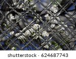 fruits blossom  spring through... | Shutterstock . vector #624687743