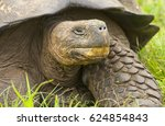 closeup of galapagos tortoise... | Shutterstock . vector #624854843