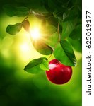 red apple on a tree in the...   Shutterstock . vector #625019177