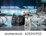 holiday vacation jack russell... | Shutterstock . vector #625241933