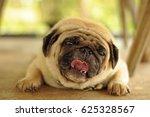 adorable pug dog lying on floor | Shutterstock . vector #625328567