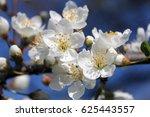 cherry blossoms  bloom | Shutterstock . vector #625443557