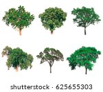 isolated tree  tree on white... | Shutterstock . vector #625655303