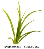 green leaves of daylily... | Shutterstock . vector #625660157
