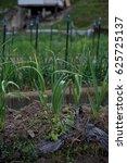 Small photo of Japanese allotment garden