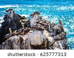 Brown Pelicans Resting On The...