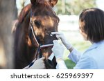 Stock photo vet healing wound of a horse outdoors at ranch selective focus on woman 625969397