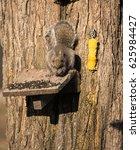 Squirrel Laying On Feeder...