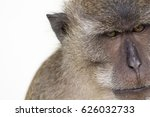 monkey with white background. | Shutterstock . vector #626032733