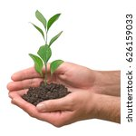 sapling in hands | Shutterstock . vector #626159033