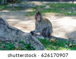 macaque living in national park ... | Shutterstock . vector #626170907