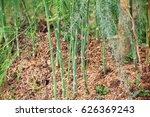 asparagus plant | Shutterstock . vector #626369243