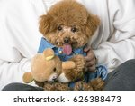 hold the poodle by the owner | Shutterstock . vector #626388473