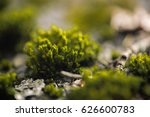 macro picture of green moss.... | Shutterstock . vector #626600783