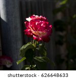 gloriously   magnificent...   Shutterstock . vector #626648633