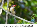 banded kingfisher perching on a ... | Shutterstock . vector #626660267