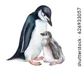 arctic penguins isolated on... | Shutterstock . vector #626933057