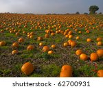 Halloween Pumpkin Patch Field...