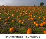 Halloween Pumpkin Patch Field...