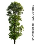 isolated tree on white with... | Shutterstock . vector #627084887