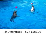 two dolphins playing ball on...   Shutterstock . vector #627115103