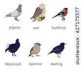 Vector Bird Collection Icons....