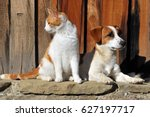 Stock photo cat and dog sitting outside the cottage 627197717