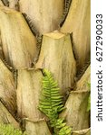 Small photo of Closeup of truncate leaf bases of a palmetto tree, with a fern in south Florida.