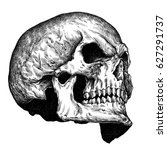 engrave isolated human skull... | Shutterstock . vector #627291737