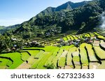 Rice Terraces In The...